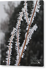 Frosty Branches Acrylic Print by Carol Groenen