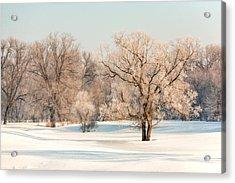 Frosty Forest Acrylic Print by Todd Klassy