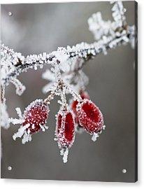 Frosty Garden Acrylic Print by Frank Tschakert