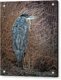 Acrylic Print featuring the photograph Frosty Heron by Britt Runyon
