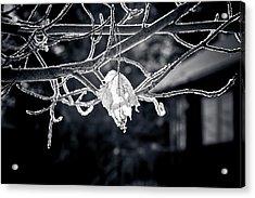 Frosty Morn  Acrylic Print
