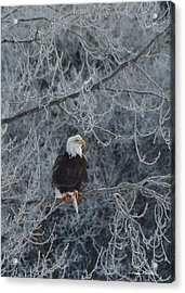 Frosty Morning Eagle Acrylic Print