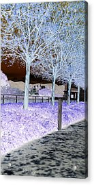 Frosty Trees At The Getty Acrylic Print