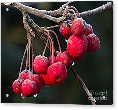 Frosted Apples Acrylic Print