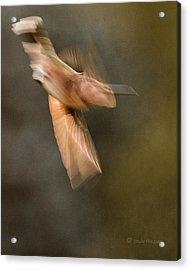 ...frozen Flight Hummingbird.... Acrylic Print