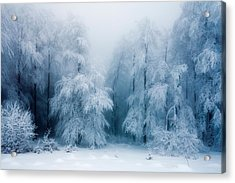 Frozen Forest Acrylic Print by Evgeni Dinev
