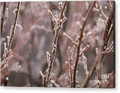 Acrylic Print featuring the photograph Frozen Garden by Ana V Ramirez