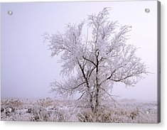 Frozen Ground Acrylic Print by Chad Dutson