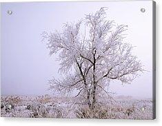 Frozen Ground Acrylic Print