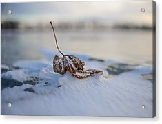 Frozen Leaf On Lake Reno Acrylic Print