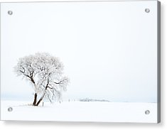 Frozen Morning Acrylic Print