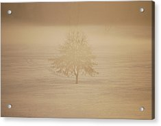 Frozen Natural Sepia Horizontal Acrylic Print by Peter  McIntosh