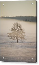 Frozen  Acrylic Print by Peter  McIntosh