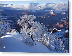 Winter Wonder Acrylic Print by Mike Buchheit