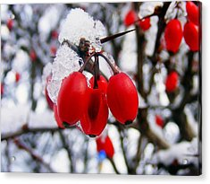 Frozen Red Berries Acrylic Print