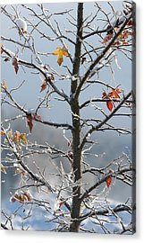 Frozen Remnants Acrylic Print by Holly Ethan