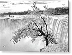 Frozen Tree Near Niagara Falls Acrylic Print by Alex Galkin