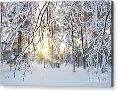 Frozen Trees Acrylic Print by Delphimages Photo Creations