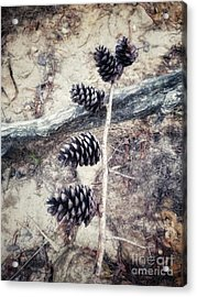 Fruit Of The Pine Acrylic Print