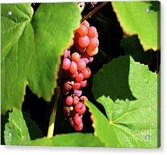 Fruit Of The Vine Acrylic Print