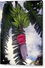 Fruitful Beauty Acrylic Print by Karen Wiles