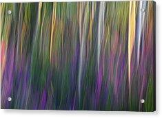 Fuchsia At Dawn Acrylic Print