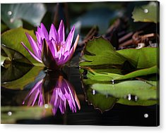 Acrylic Print featuring the photograph Fuchsia Dreams by Suzanne Gaff