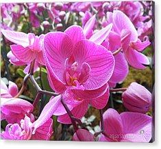 Fuchsia Flower Field Acrylic Print