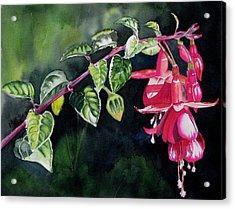 Fuchsia Acrylic Print by Maria Barry