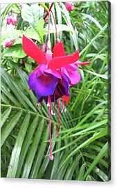 Acrylic Print featuring the photograph Fuchsia by Mary Ellen Frazee