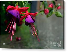 Fuchsia Original Photo Acrylic Print
