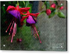 Fuchsia's Beating As One Together -silk Edit Acrylic Print