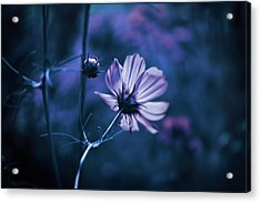 Acrylic Print featuring the photograph Full Moon Cosmos by Douglas MooreZart