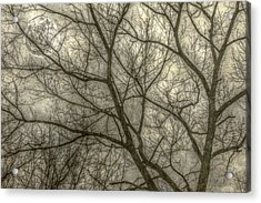 Full Moon In Spring Trees Yellow Acrylic Print by Randy Steele