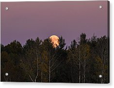 Full Moon Over Orchard Acrylic Print