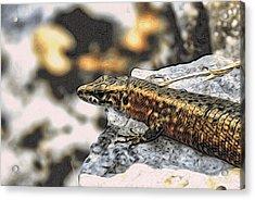 Full Up Lizard  Acrylic Print