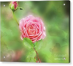 Fully Open Acrylic Print