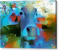 Turquoise Abstract Fun Cow Rajasthan India 1a Acrylic Print by Sue Jacobi