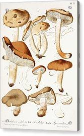Fungi Acrylic Print by Jean-Baptiste Barla