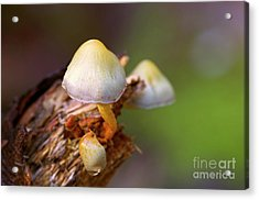 Acrylic Print featuring the photograph Fungi On A Stump by Sharon Talson