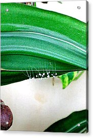 Fungi Stalks On Palm Frond Acrylic Print by Andrew Blitman