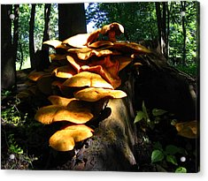 Acrylic Print featuring the photograph Fungus Colony 23 by Maciek Froncisz