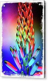 Funky Aloe Acrylic Print