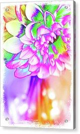 Funky Dahlia Acrylic Print