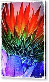 Funky Protea Acrylic Print