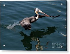 Acrylic Print featuring the photograph Funky Wings by Rod Wiens