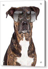 Funny Dog With Cat Reflection In Sunglasses Acrylic Print