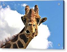 Funny Face Giraffe Acrylic Print