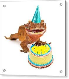 Funny Gecko Lizard Eating Birthday Cake Acrylic Print