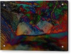 Furred Fiend Acrylic Print by John Ricker